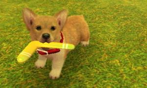 dogs0521.jpg
