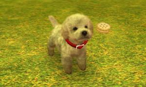 dogs0525.jpg