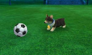 dogs0529.jpg