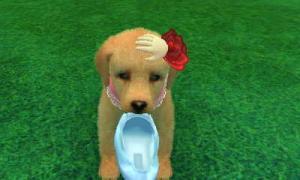 dogs0535.jpg