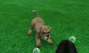 dogs0539.jpg