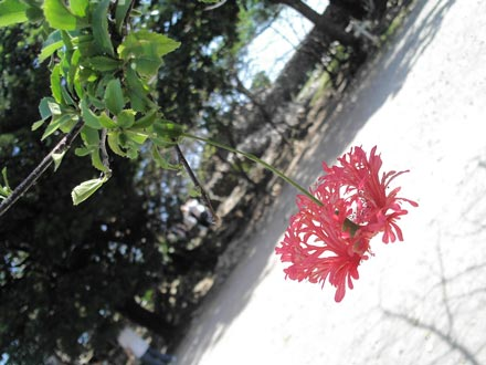 okinawa-1