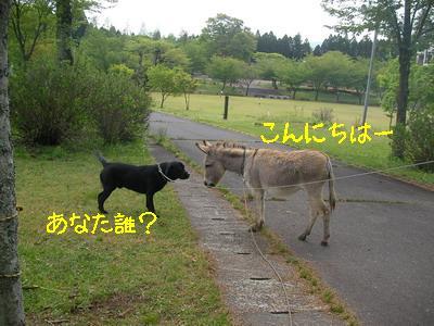 2009-04-27_SANY0059_2.jpg