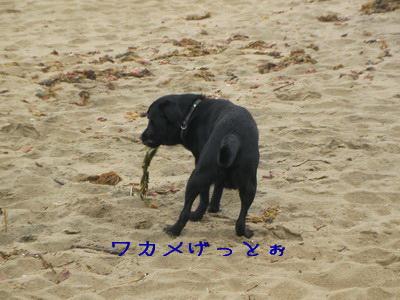 2009-05-04_SANY0016_2.jpg