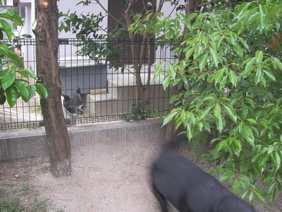 2009-05-15_SANY0080.jpg