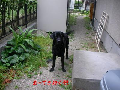 2009-05-30_SANY0023_4.jpg