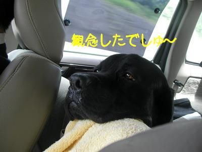 2009-05-30_SANY0037_2.jpg