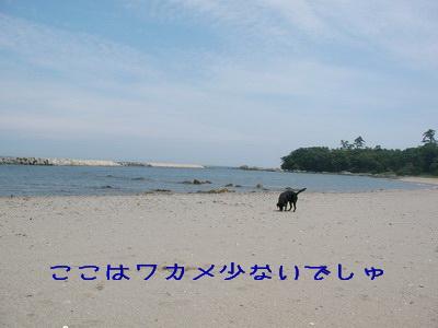 2009-05-30_SANY0041_2.jpg