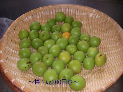 2009-06-08_SANY0079_2.jpg