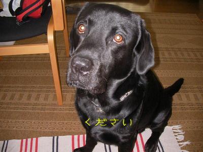 2009-06-09_SANY0145_2.jpg