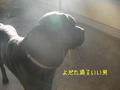 2009-06-19_SANY0072_2.jpg