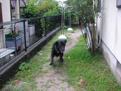 2009-06-30_SANY0134.jpg
