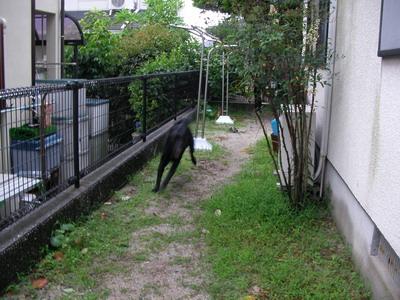 2009-06-30_SANY0136.jpg