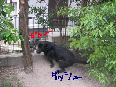SANY0079_2.jpg