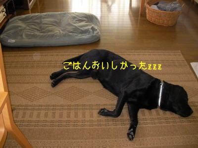 b_2009-05-31_SANY0079.jpg