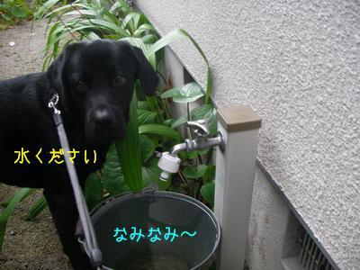 b_2009-06-10_SANY0042.jpg