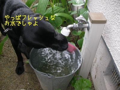 b_2009-06-10_SANY0044.jpg