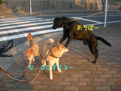 b_2009-06-19_SANY0012.jpg