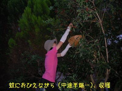 b_2009-06-27_SANY0188.jpg