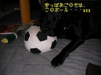 b_2009-06-28_SANY0015_2.jpg