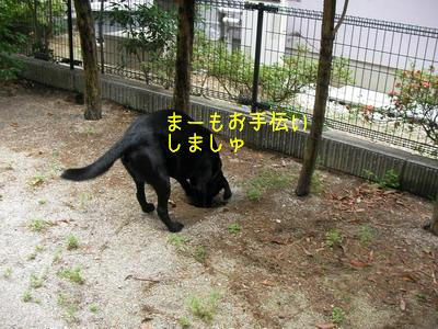 b_2009-06-28_SANY0022.jpg
