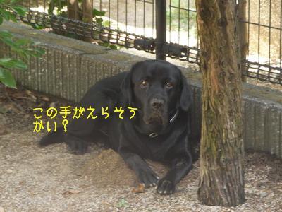 b_2009-06-28_SANY0023_2.jpg