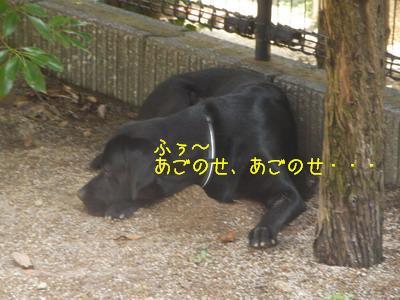 b_2009-06-28_SANY0026_2.jpg