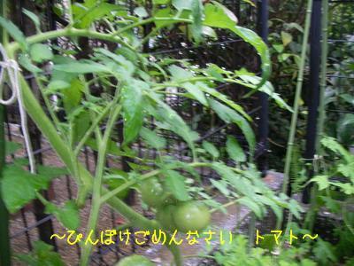b_2009-06-30_SANY0139.jpg