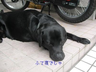 b_2009-07-03_SANY0036.jpg