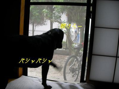b_2009-07-05_SANY0064.jpg