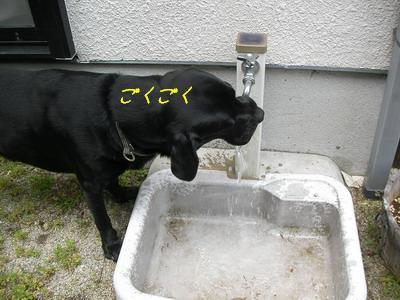 b_2009-07-05_SANY0067.jpg