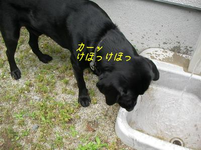 b_2009-07-05_SANY0069.jpg