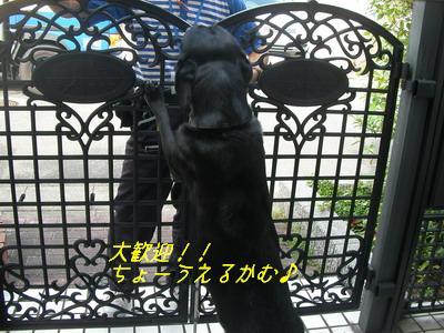 b_2009-07-10_SANY0120.jpg