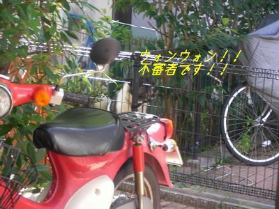 b_2009-07-10_SANY0123.jpg