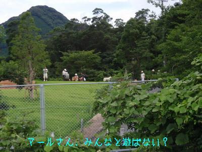 b_P7160006.jpg