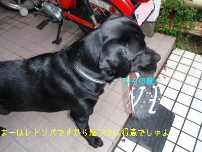 b_P7250021.jpg