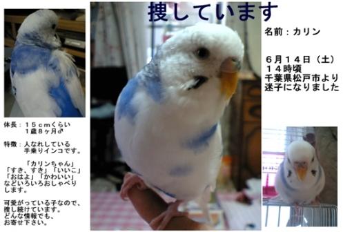 カリンのポスター・ブログ用オリジナル2