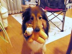 ルビーおもちゃ