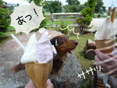hidoi_20080908091712.jpg