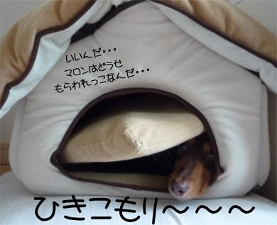 hikikomori.jpg