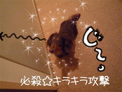 kirakira_20080818145459.jpg
