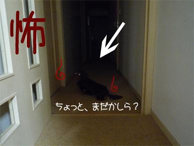 kowa_20080818150154.jpg
