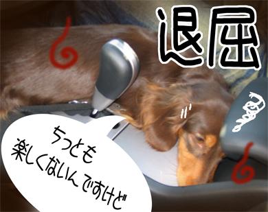 taikutsu_20080903155551.jpg