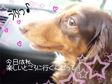 ufu_20080903155532.jpg