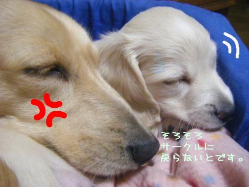 レオ&ヤマト