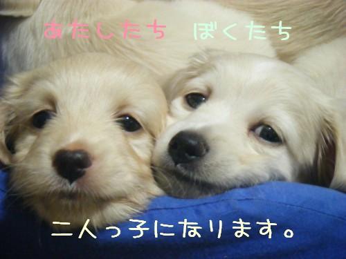 アリス&ヤマト