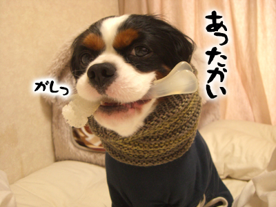 CIMG4677.jpg