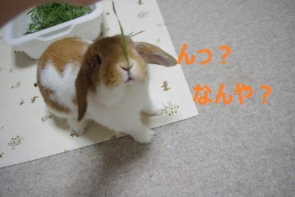 11_20110904193011.jpg