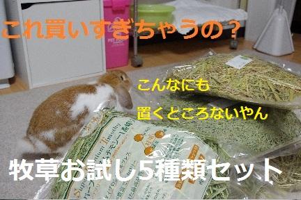 1_20110902000017.jpg