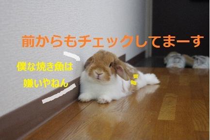 2_20110902193415.jpg